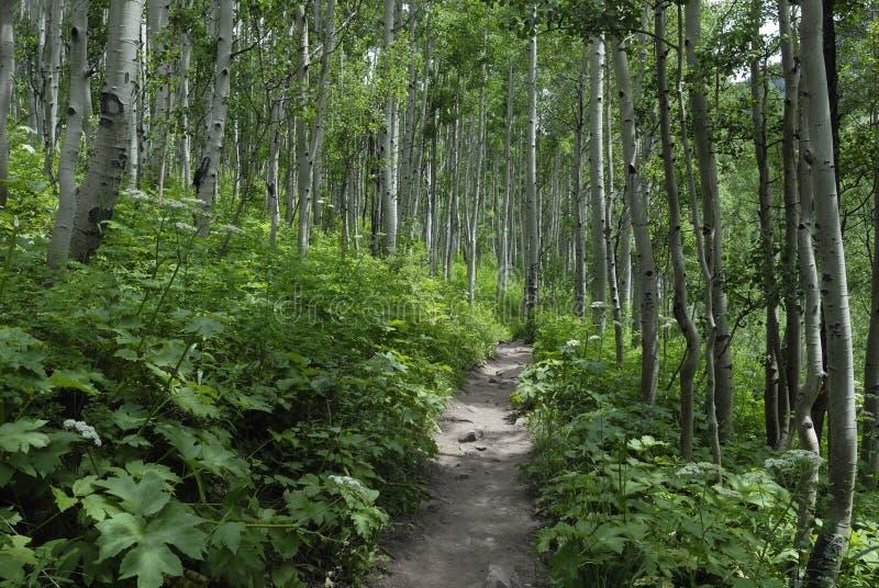 Traccia di escursione in montagne rocciose del Colorado immagini stock