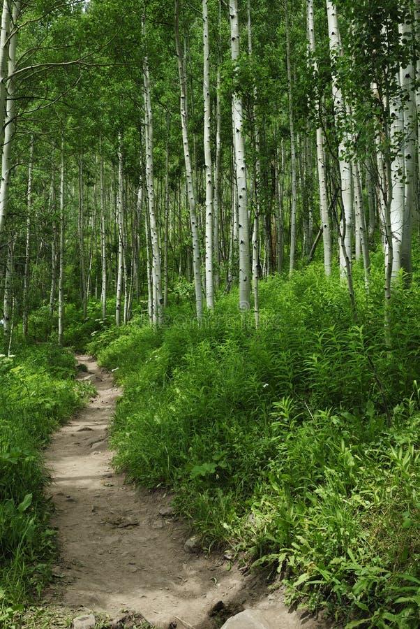 Traccia di escursione in montagne rocciose del Colorado fotografia stock