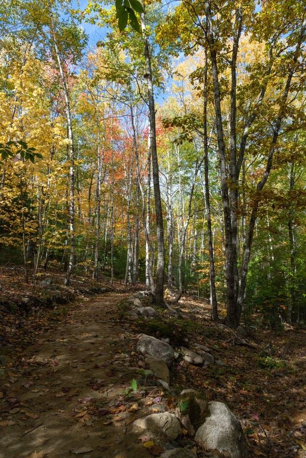 Traccia di escursione nel parco nazionale di acadia fotografia stock libera da diritti