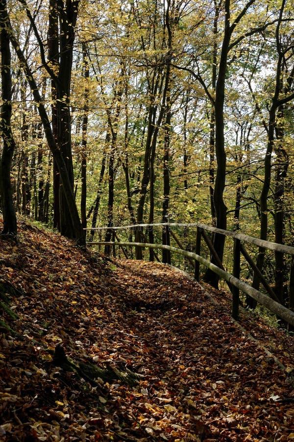 Traccia di escursione nella foresta di autunno fotografia stock libera da diritti