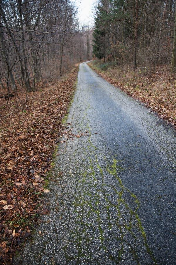Traccia di escursione nella foresta decidua di autunno fotografia stock libera da diritti