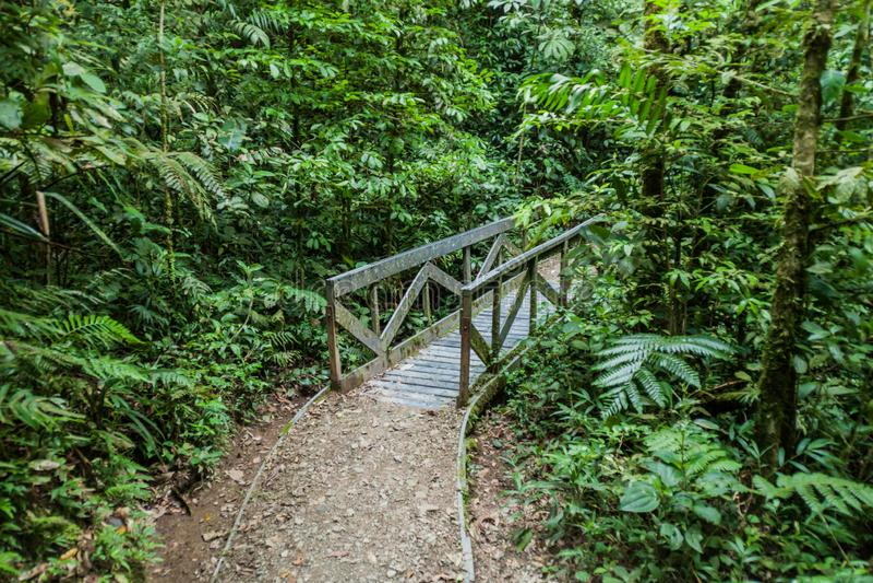 Traccia di escursione nella foresta della nuvola di Reserva Biologica Bosque Nuboso Monteverde, Costa Ri immagini stock libere da diritti