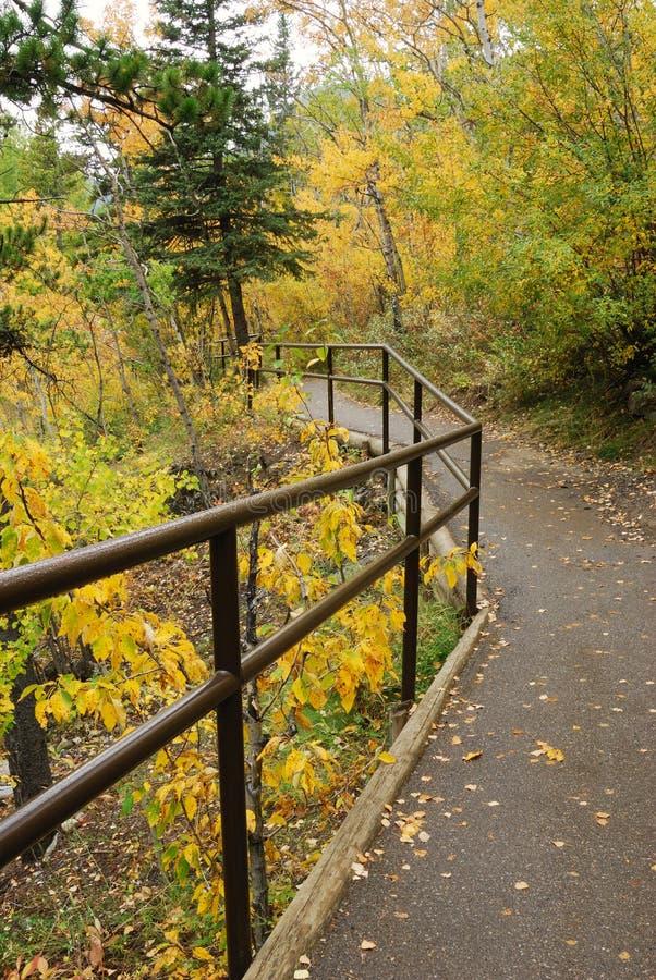 Download Traccia Di Escursione Nella Foresta Di Autunno Immagine Stock - Immagine di esterno, scena: 7320091