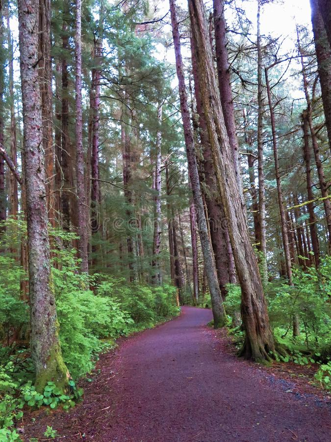 Traccia di escursione in Sitka, Alaska fotografia stock libera da diritti
