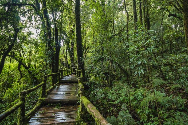 Traccia di Forest At Ang Ka Nature in Doi Inthanon fotografia stock