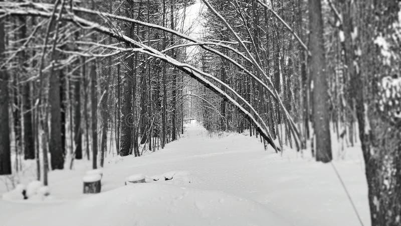 Traccia di inverno, Cheboygan Michigan fotografia stock libera da diritti