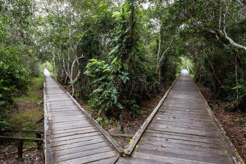 Traccia di legno biforcata nella giungla sul modo accamparsi Leakey, la stazione d'alimentazione più famosa per gli orangutan den fotografia stock