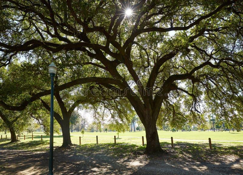 Traccia di Marvin Taylor del parco di Houston Hermann fotografia stock
