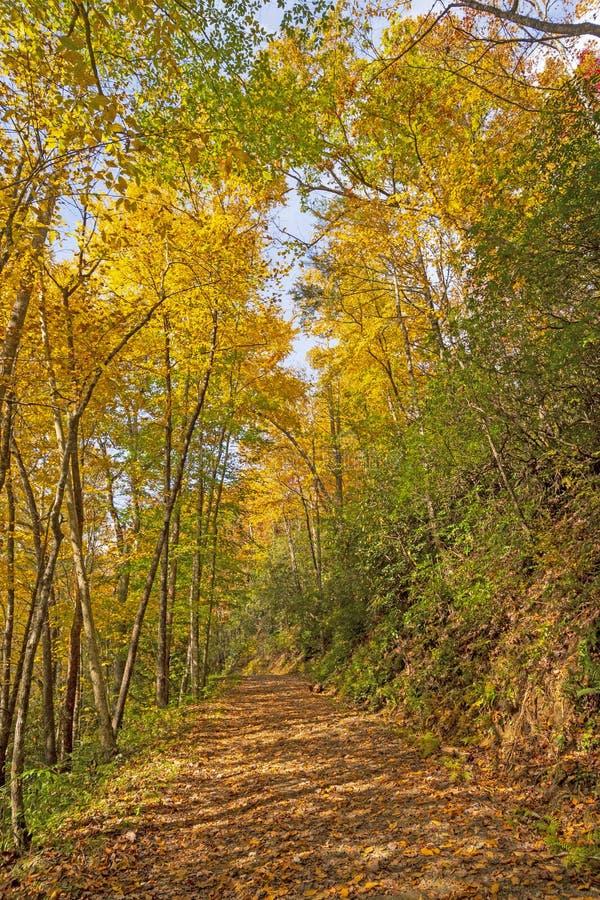 Traccia di montagna in autunno fotografia stock libera da diritti