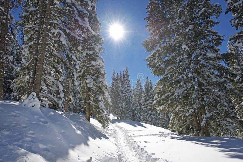 Traccia di montagna di inverno immagine stock libera da diritti