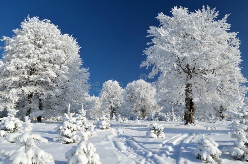 Traccia di montagna fra gli alberi nevosi immagini stock libere da diritti