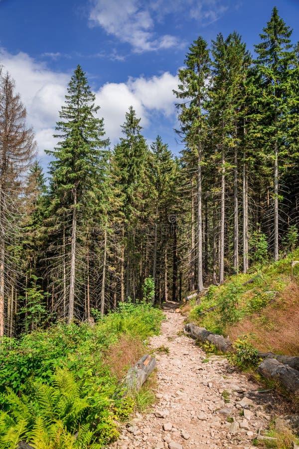 Traccia di montagna meravigliosa nella foresta immagine stock