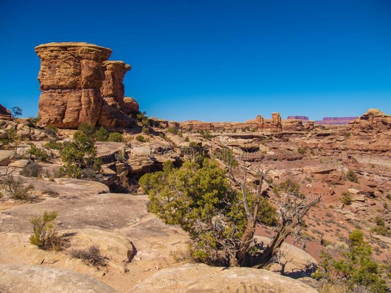 Traccia di Slickrock nel parco nazionale di Canyonlands immagine stock libera da diritti