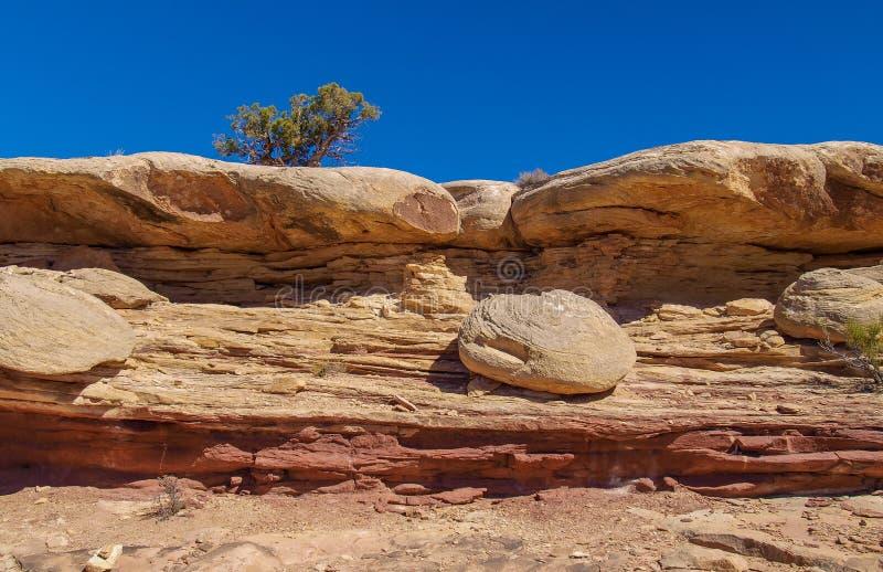 Traccia di Slickrock nel parco nazionale di Canyonlands fotografie stock libere da diritti