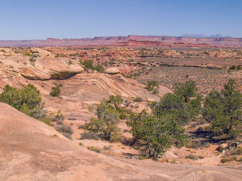 Traccia di Slickrock nel parco nazionale di Canyonlands fotografia stock