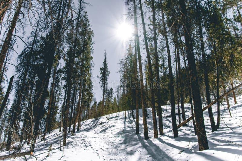Traccia di Snowy nel legno di Colorado immagine stock