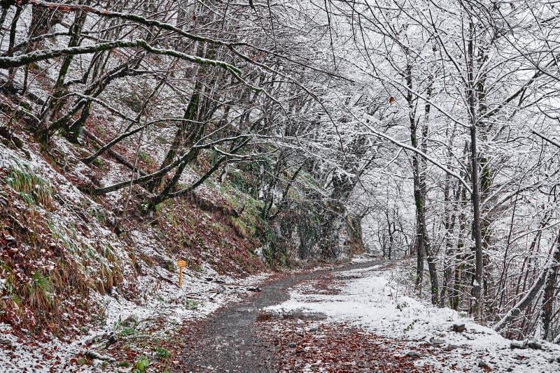 Traccia di Snowy nella sosta fotografia stock
