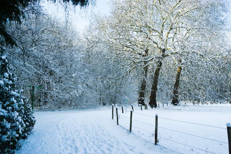 Traccia di Snowy sul confine del Forrest il prato fotografia stock
