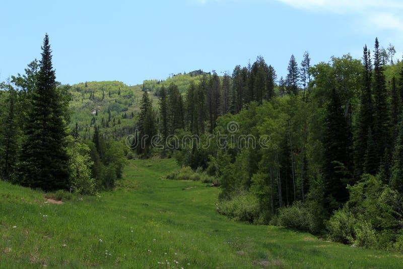 Traccia di Thunderhead, Steamboat Springs, Colorado immagini stock libere da diritti