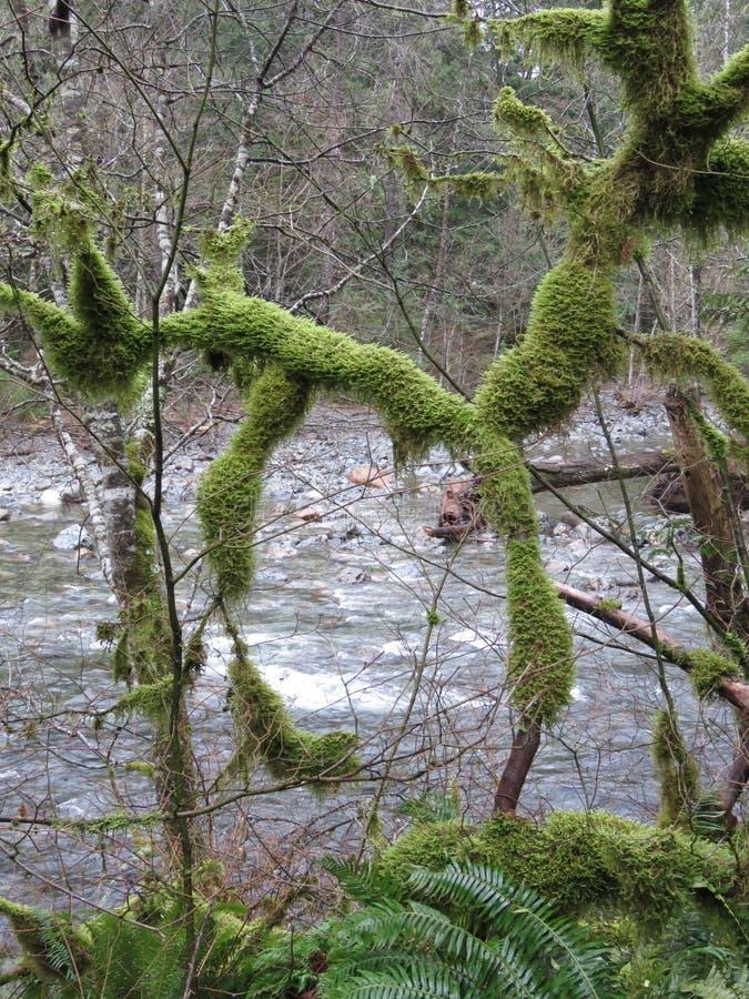 Traccia di Twin Falls, parco di stato di Olallie, Washington immagini stock