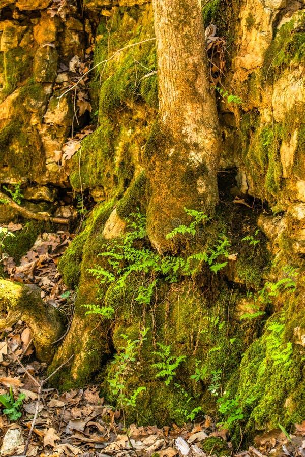 Traccia muscosa della valle degli alberi, delle rocce e della vegetazione fotografie stock