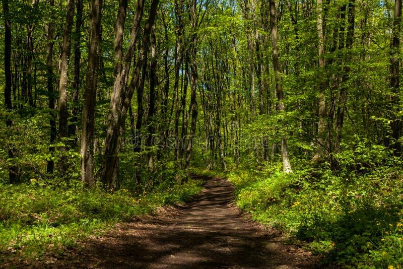 Traccia nella foresta fotografia stock libera da diritti