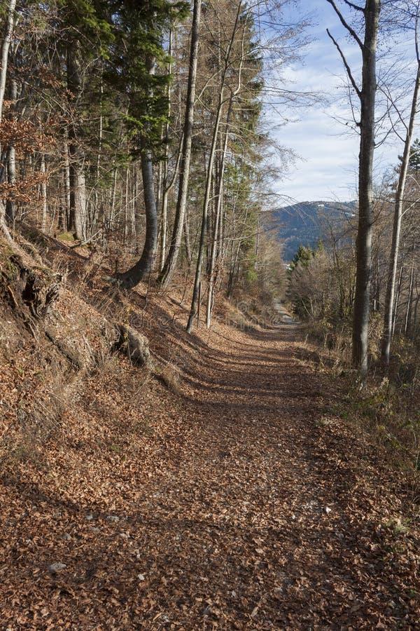 Traccia nella foresta fotografie stock