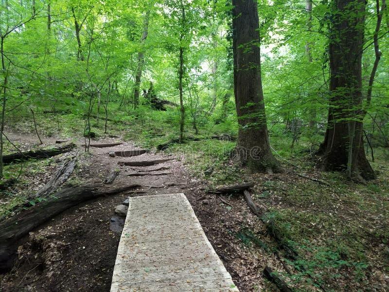 Traccia o percorso del sentiero costiero con la maglia per trazione nella foresta o nel legno immagini stock