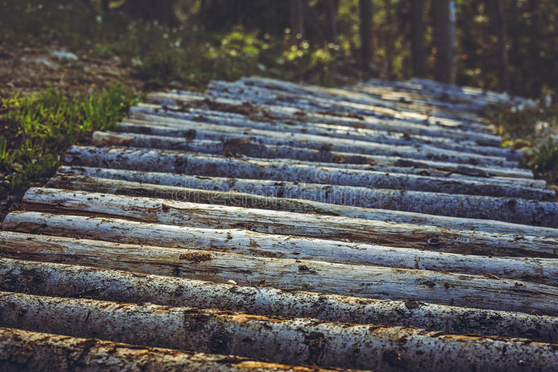 Traccia o sentiero per pedoni di legno del mountain bike fotografia stock libera da diritti