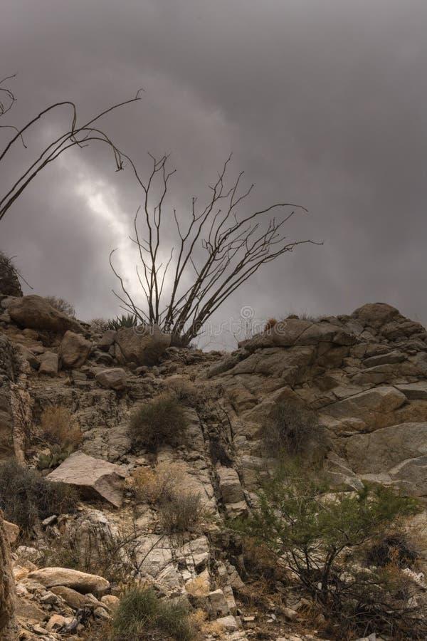 Traccia rocciosa del deserto sotto il cielo drammatico della nuvola temporalesca, siluetta del cactus del ocotillo alla cima di u immagine stock