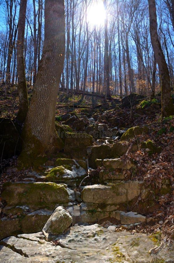 Traccia rocciosa del percorso della passeggiata del burrone attraverso la foresta di legno duro fotografia stock libera da diritti