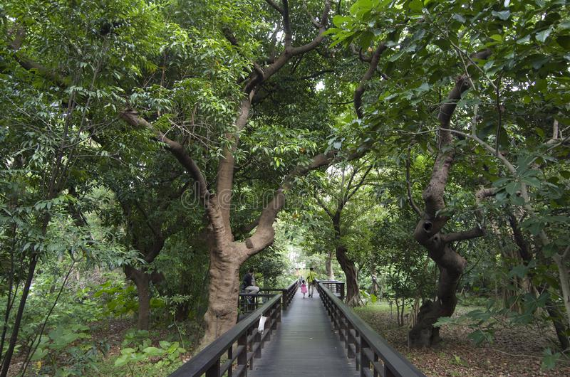Traccia Taipei Taiwan del sentiero costiero del giardino botanico immagini stock