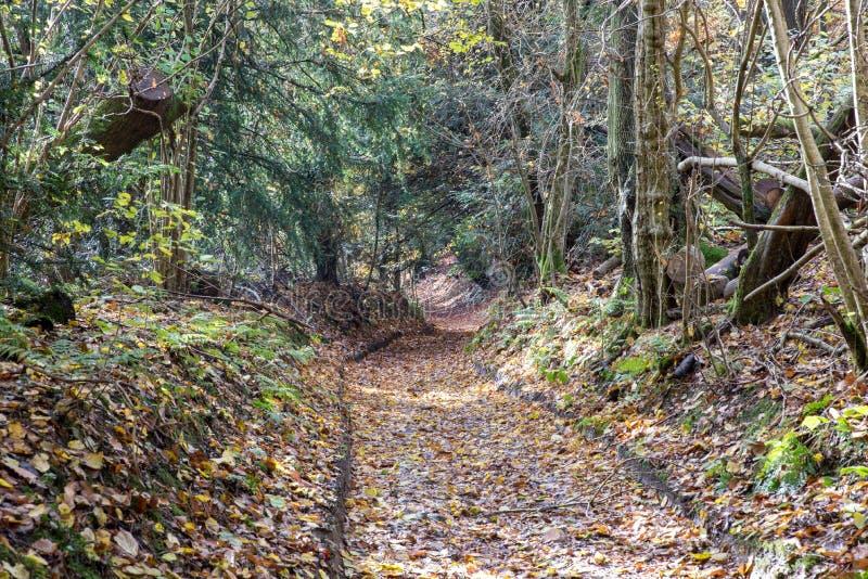 Traccia a terra foresta fotografia stock