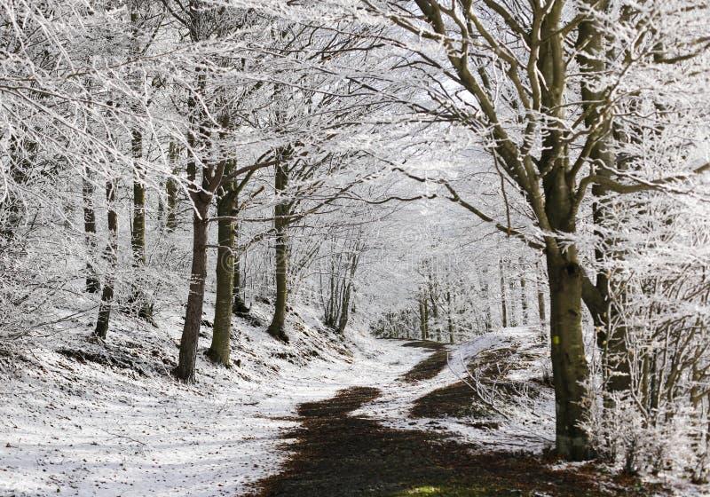 Traccia in una foresta nell'inverno fotografie stock libere da diritti