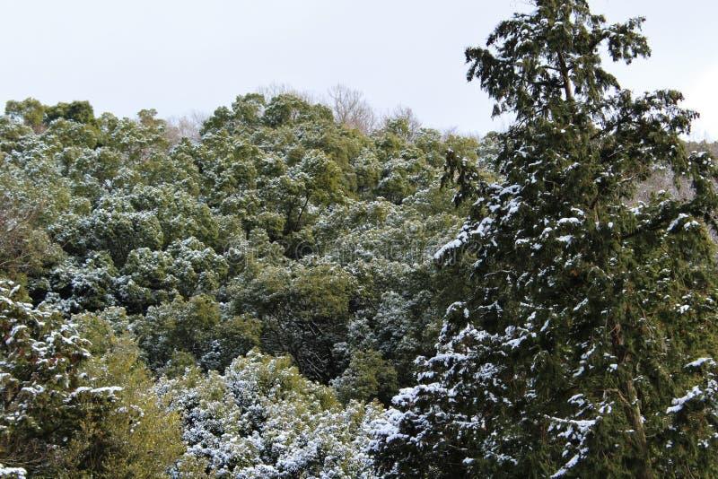 Trace de neige sur des arbres dans un climat chaud photographie stock libre de droits