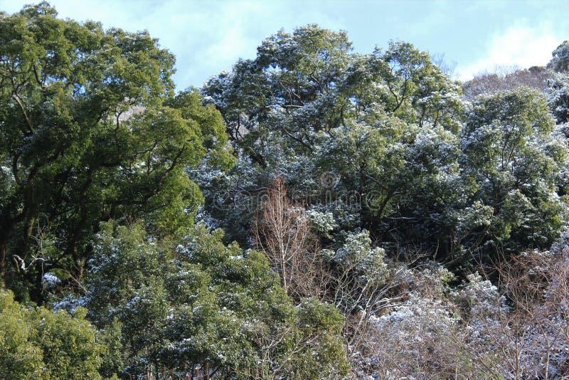 Trace de neige sur des arbres dans un climat chaud photos libres de droits