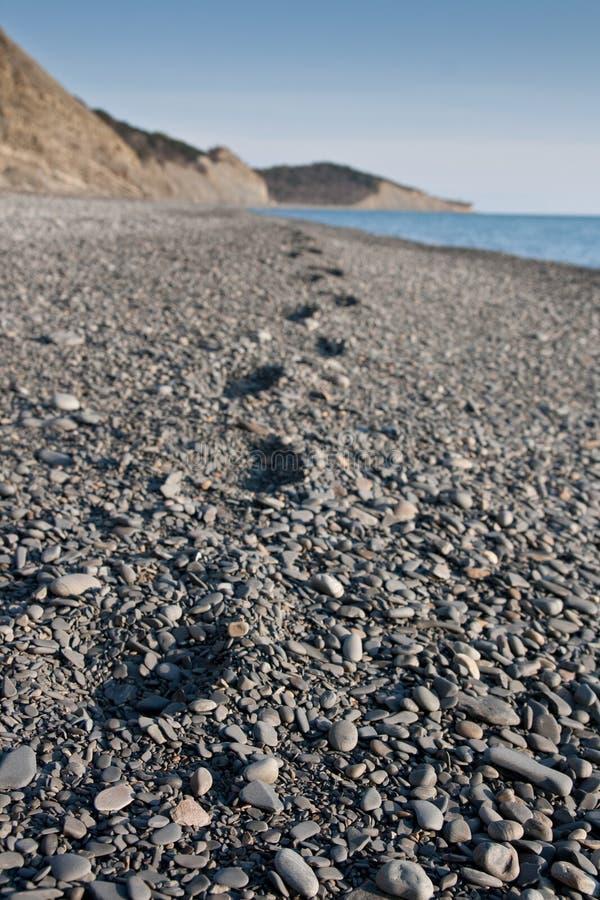 Trace on the pebble beach stock photos