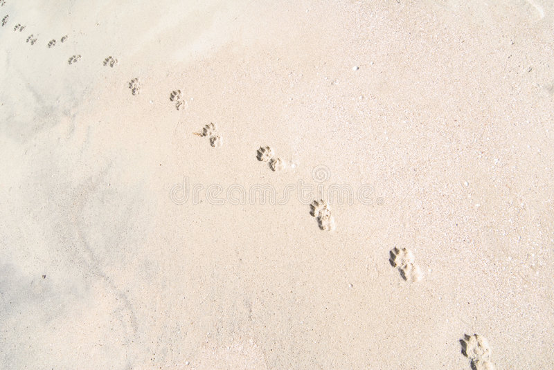 Traces images stock