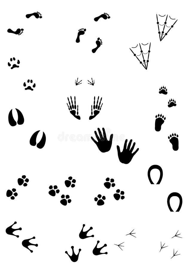 Traces illustration stock