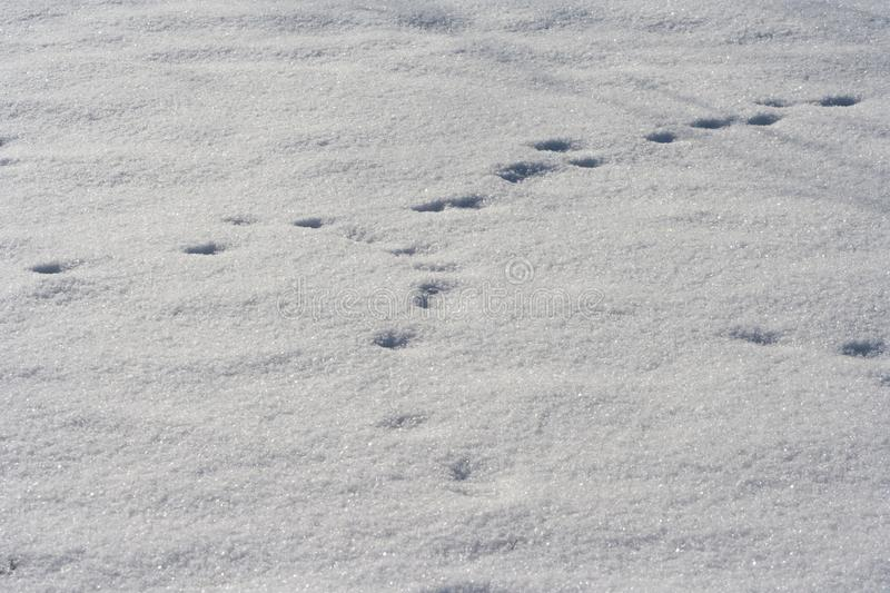 Traces of animals in snow. Deer, moose, wolf, fox, dog, cat paws footprints in the forest. royalty free stock photography