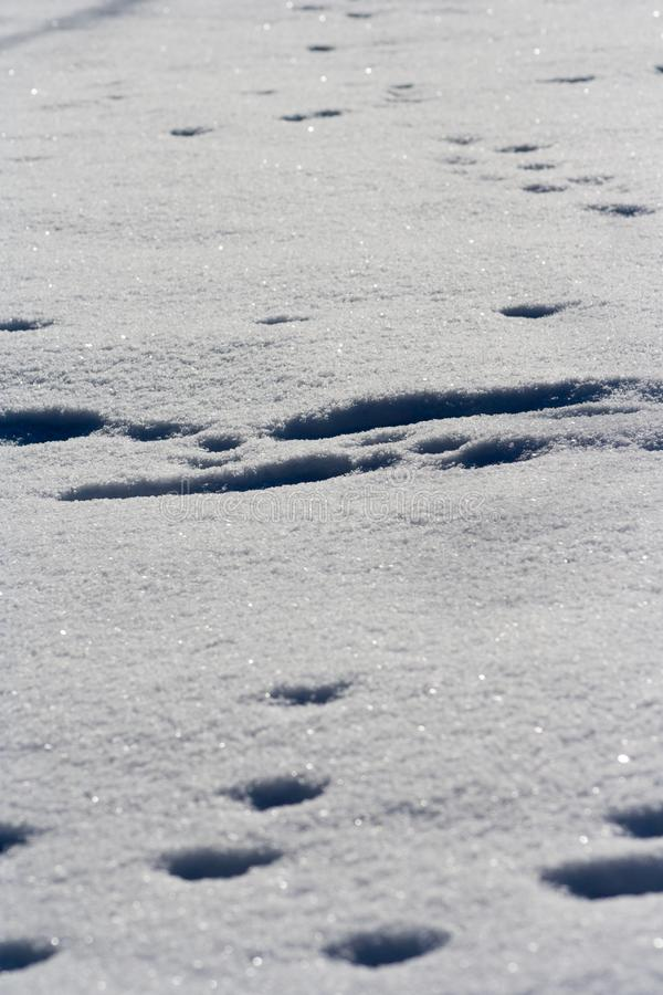 Traces of animals in snow stock photography