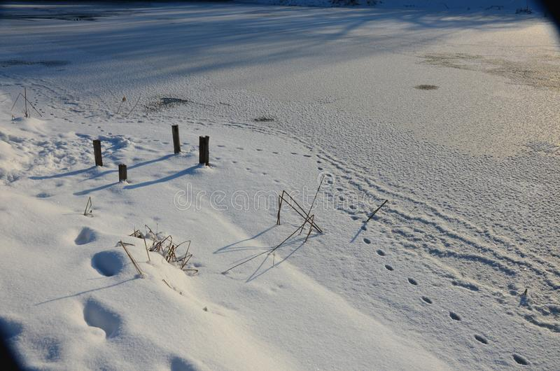 Traces of animals in snow. Hare, wolf, fox, dog, cat paws footprints in the forest. Concept of hunting and shooting wild animals. Migration and mating time royalty free stock images