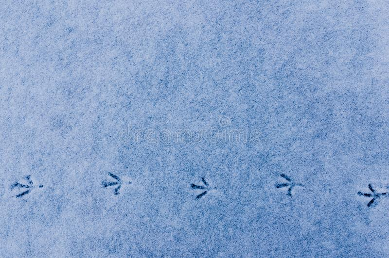 Traces of a bird on the fresh snow royalty free stock photos