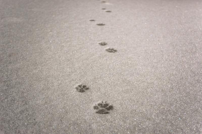 Traces of a cat royalty free stock photos