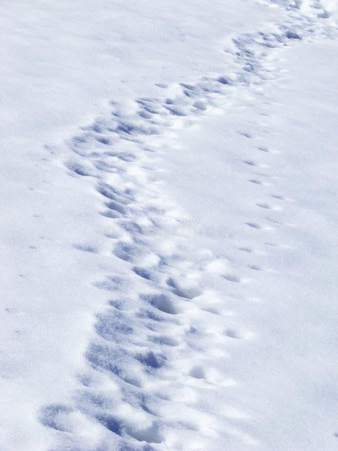 Traces dans la neige photographie stock