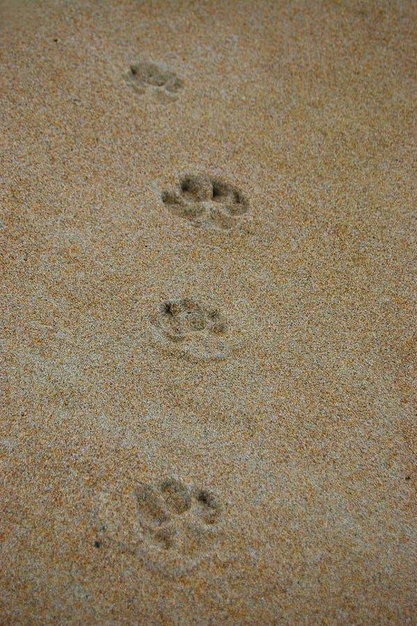 Traces de chien dans le sable images libres de droits