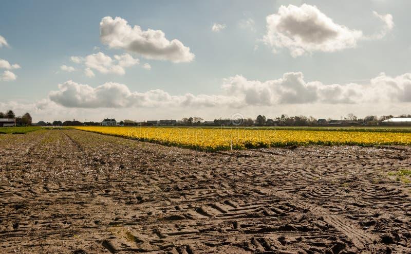 Traces de tracteur sur le flowerfield photo stock