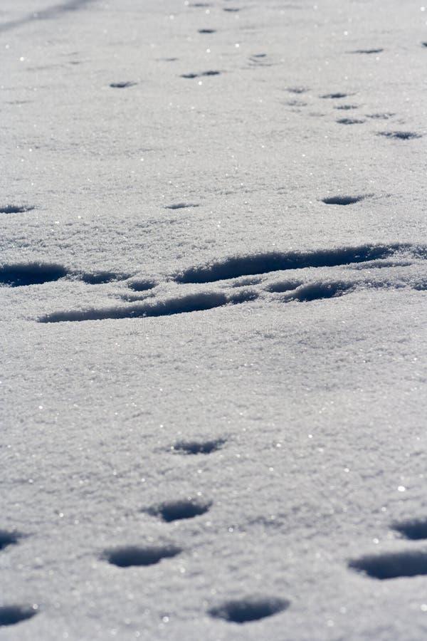 Traces des animaux dans la neige photographie stock