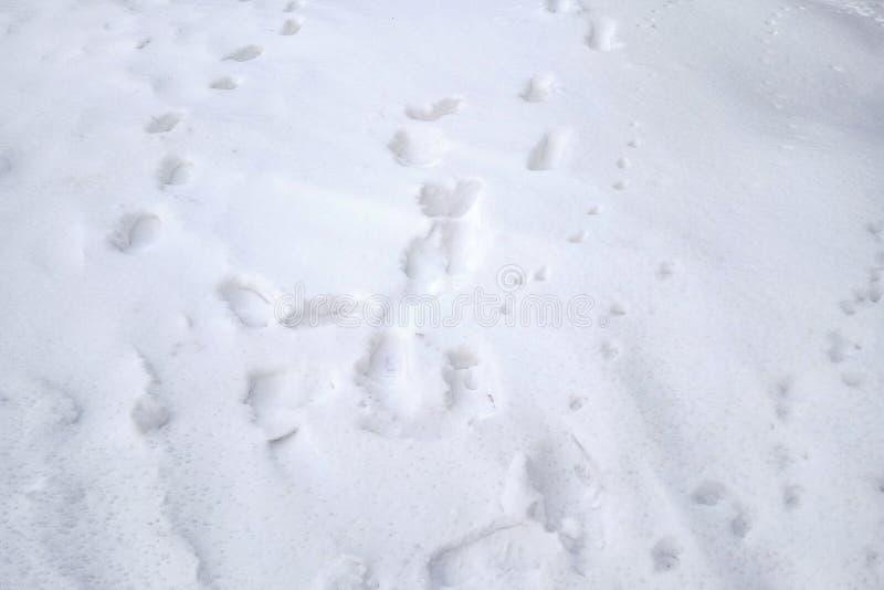 Traces des animaux et des personnes dans la neige blanche fra?che image stock