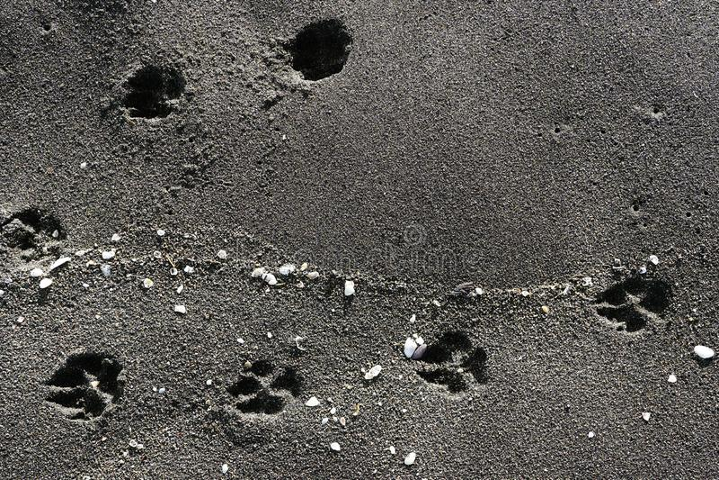 Traces et coquilles animales dans le sable au bord de la mer, plage noire de sable - la Mer Noire, la Géorgie, beau fond photographie stock